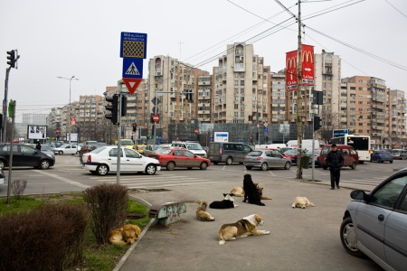 bucharest_dogs_18
