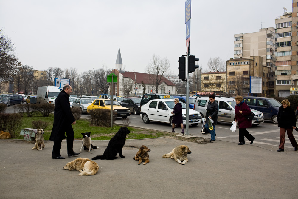 bucharest_dogs_28