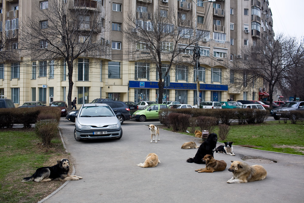 bucharest_dogs_38